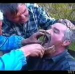 Domorośli dentyści