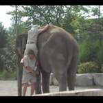 Trudna sztuka dosiadania słonia