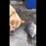 Ten pies ma złote serce!