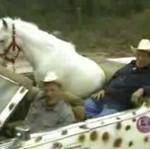 Najmądrzejszy koń
