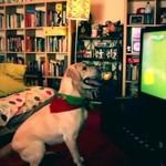 Ten pies KOCHA piłkę nożną!
