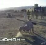 Nowi w Iraku
