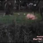 Amerykański żołnierz strzela do psa!