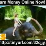 Kompilacja poświęcona słoniom