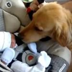 Psy kontra norowodki