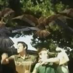 """""""Birdemic"""" - najbardziej kwasowa scena w dziejach kina"""