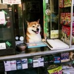 Pieseł sprzedaje papierosy w Tokio