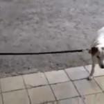 Kto prowadzi psa do domu?