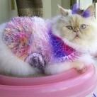 Najbardziej rozpieszczony kot świata!