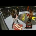 MMA - festiwal agresji