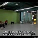 Luksusowy hotel dla zwierzat na Tajwanie