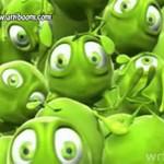 Co czuje zielony groszek?