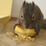 Największy przysmak wiewiórki - słodkie