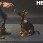 Psia reakcja na lewitująca parówkę