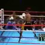 Zwierzę na ringu