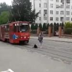 Pies kontra tramwaj