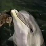 Delfin + kot = ?