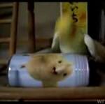 Papuga vs puszka