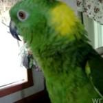 Papuga z niezwykłym głosem
