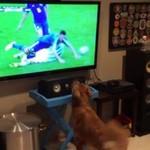Ten pies kocha oglądać sport