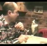 Kot prosi o jedzenie... NA MIGI!?