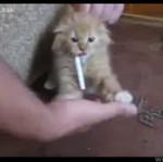Pierwszy nałóg kotka