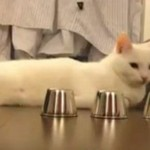 Kot potrafi grać w kubki!
