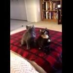 Kotki kochają rave!