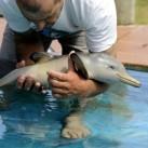 Kolekcjoner SŁODKOŚCI - uratowany delfinek