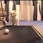Koty na bieżni - kompilacja
