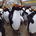Pingwiny w metrze - ŚWIETNE!