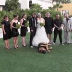 Ten pies miał jedynie podać obrączki na ślubie