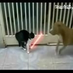 Kot Jedi - pies nie ma szans