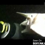 Rekin - goblin z Japonii