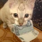 Jeżeli pieniądze giną z Twojego portfela...