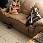 Szaleństwo bulldoga Maggie
