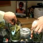 Sklepy z LEGALNĄ marihuaną