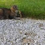 Kot, zaatakowany przez... swój obiad!