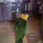 Jumpstyle papugi!