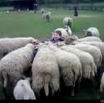 Zabawa na wsi- oni to mają metody...