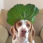 100 warzyw i owoców - test cierpliwości psa