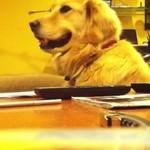 Ten pies kocha dźwięk gitary!