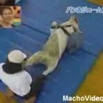 Wspólne ćwiczenia psa i szympansa