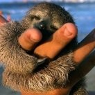 NAJSEKSOWNIEJSZY leniwiec świata!