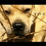 Parkourowy pies z Ukrainy