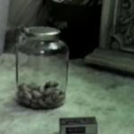Najsprytniejsza mysz na świecie
