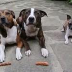 Mały pies i jego wilczy apetyt