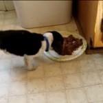 Ten pies przedawkował filmiki Chodakowskiej!