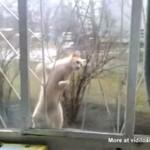 Kot o zacięciu wspinaczkowym