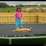Kot na trampolinie - HA, HA, HA!